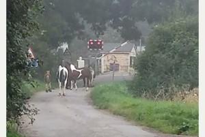 Horses roaming near a railway crossing in Milton in September 2014